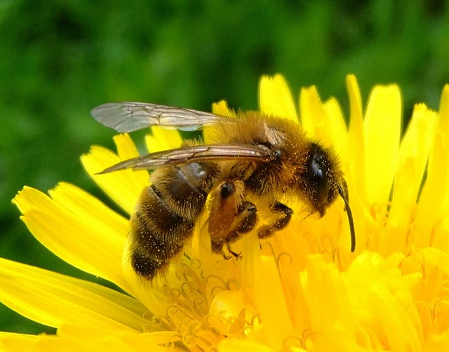 Sweet News From US Beekeepers: Colony Numbers At 20-Year High