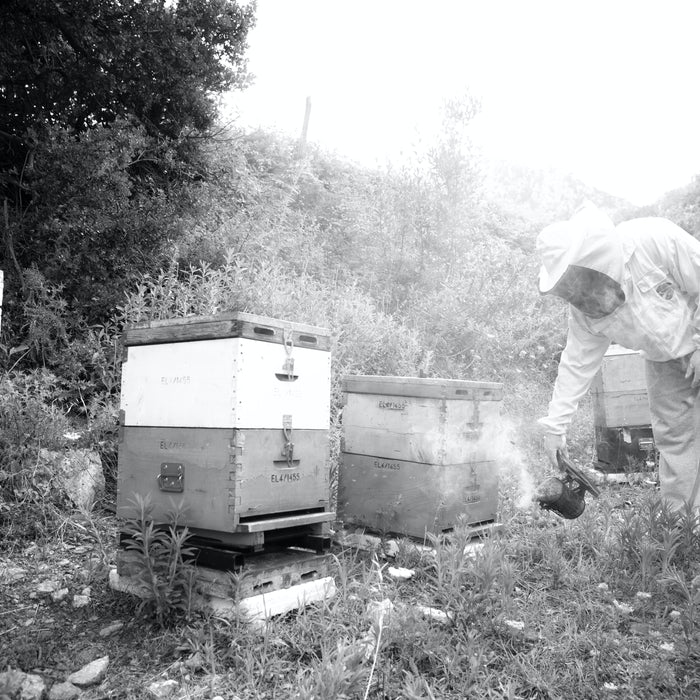 Fall Beekeeping, Part 2: Do Your Bees Have Enough Honey to Make It Through the Winter?