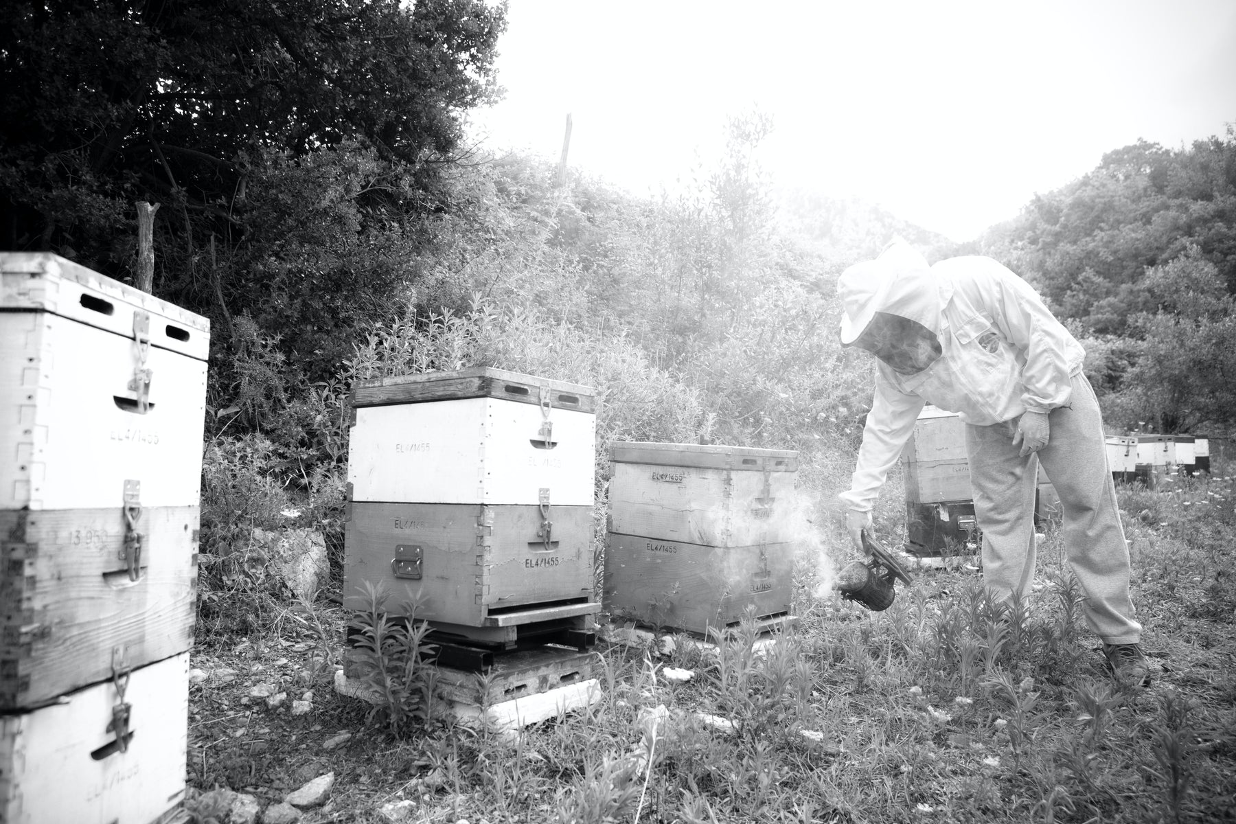 Fall Beekeeping, Part 3:  Supplemental Feeding During the Fall and Winter