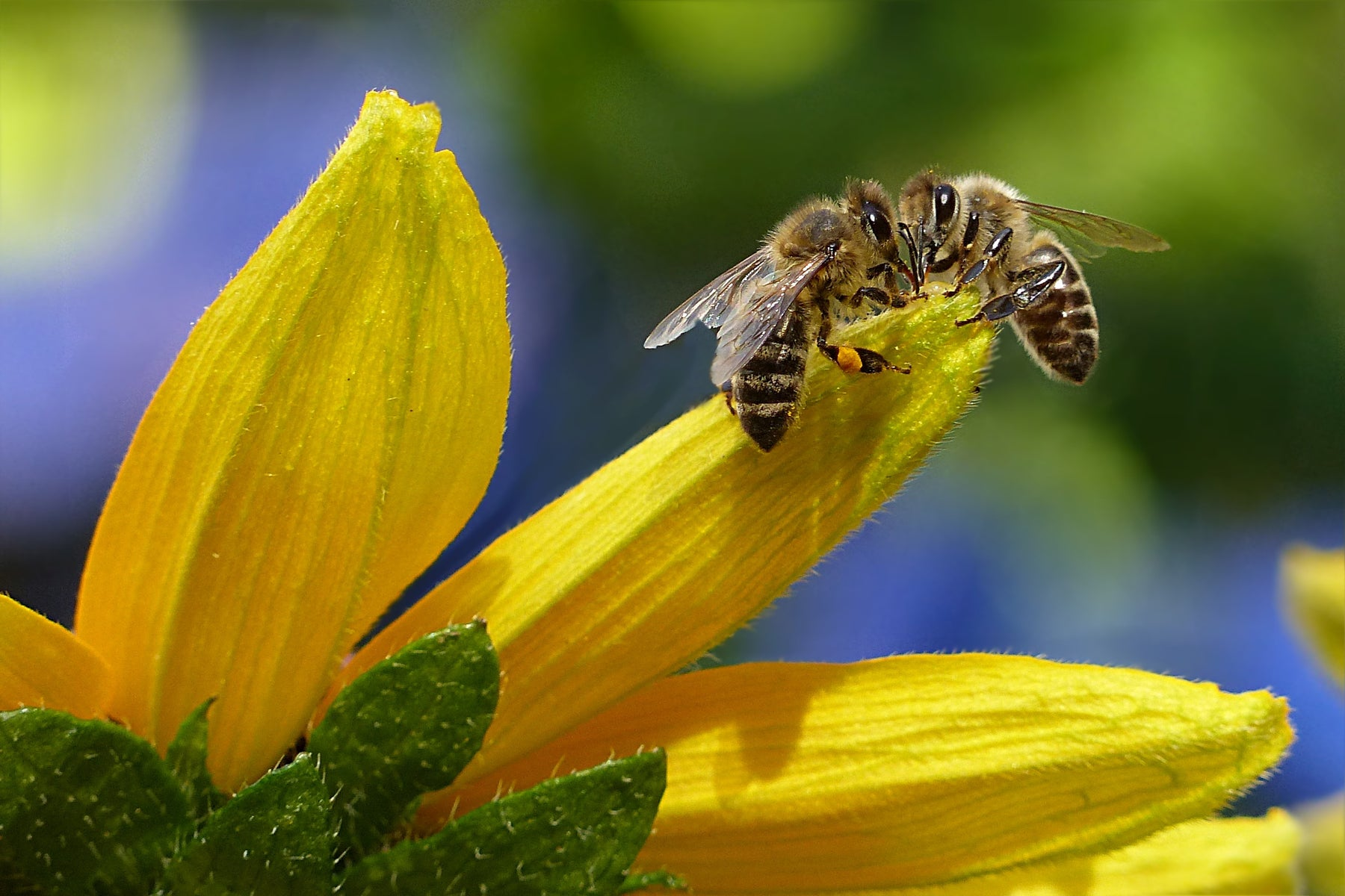 What Every Beekeeper Needs to Know About Nectar Dearths