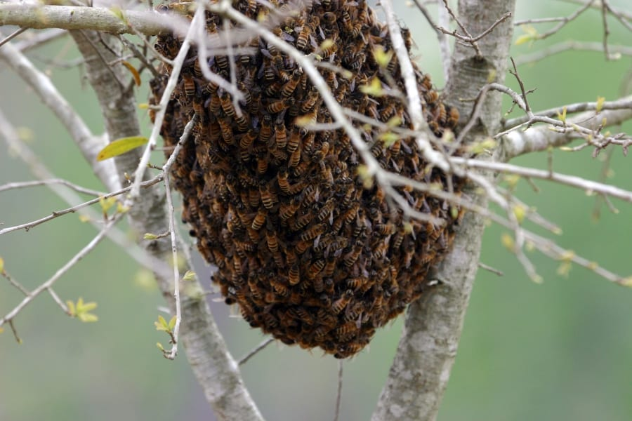What Makes Up Your Honey Bee Colony