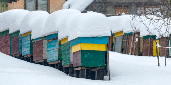 The Beekeeper's Guide to Winter Bee Activities