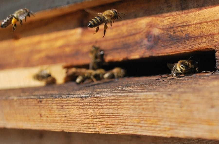 The Parts That Build Your Beehive