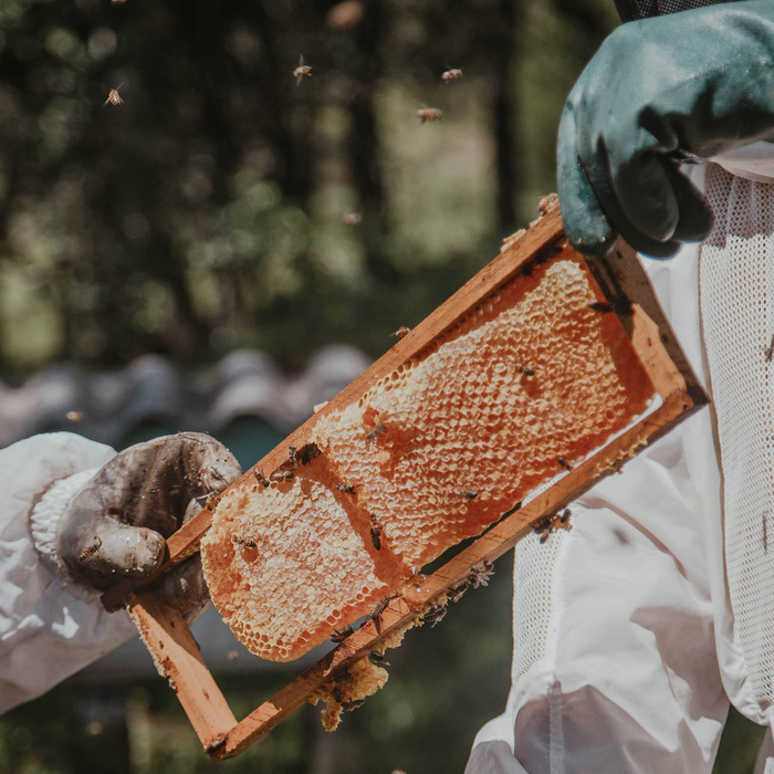 How to Harvest Honey - Beekeeper's Guide
