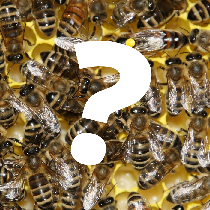 6 Ways to Tell If Your Beehive is Queenless