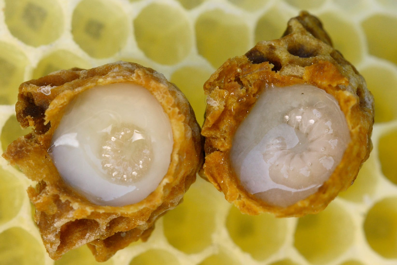 Does Royal Jelly Make a Queen?
