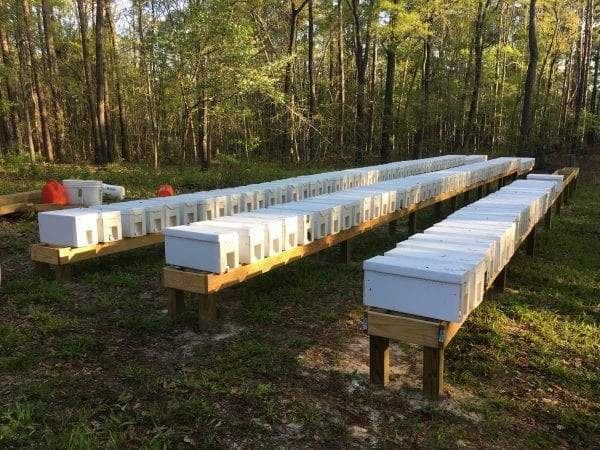 2021 Nucleus Beehives For Sale (NUC)
