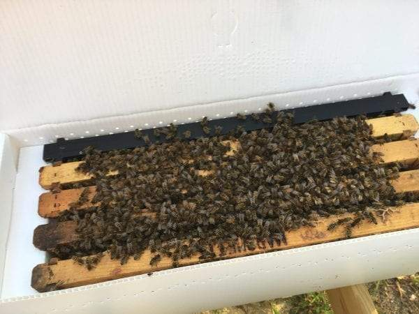 2020 Nucleus Beehives For Sale (NUC)