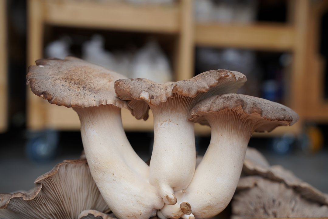 Gourmet Mushrooms | Cultivatr - Farm to Table