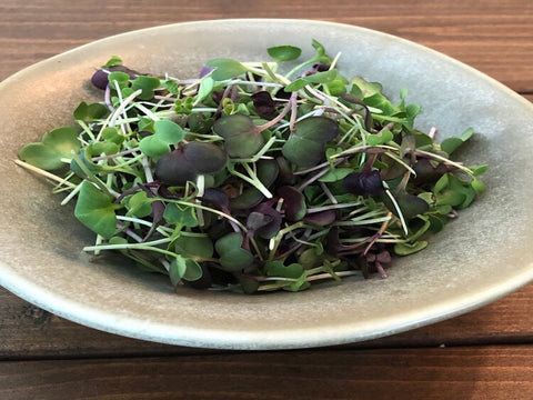 Microgreens - Brassica - 40g container - Cultivatr - Farm to Table