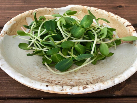 Microgreens- Sunflower Shoots - 85g container - Cultivatr - Farm to Table (4318649319475)