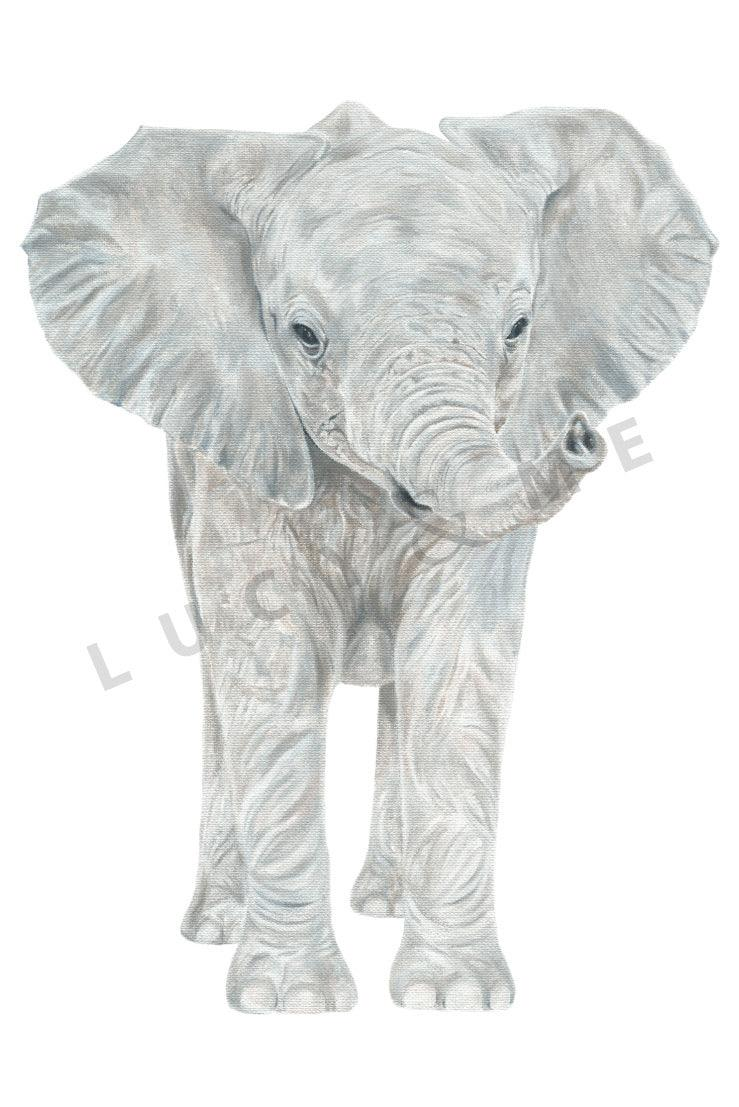 HARRY THE ELEPHANT CALF