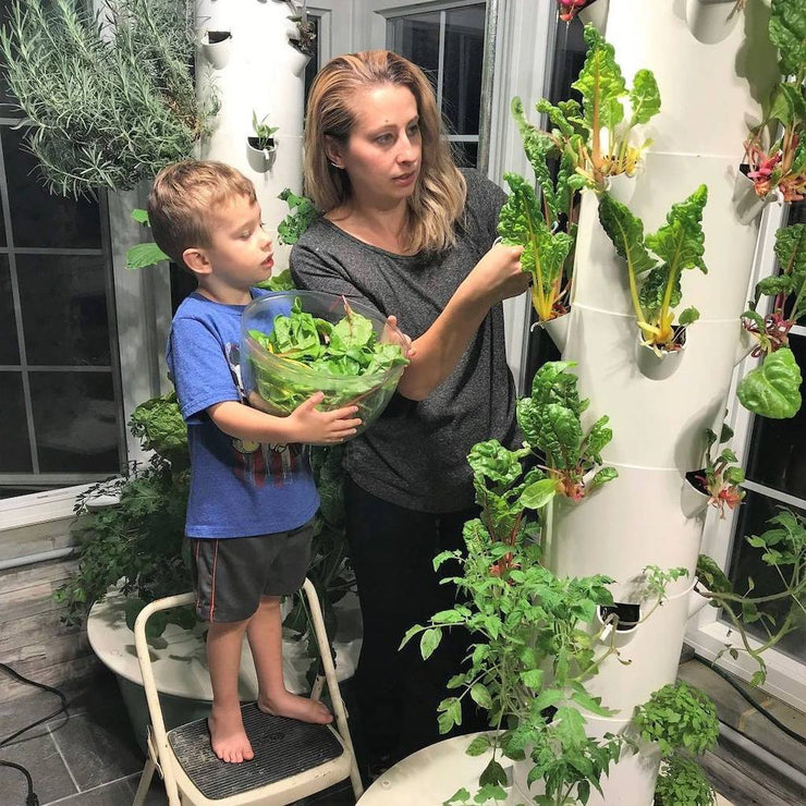 Tower Garden Family Garden, [Molecule Design]