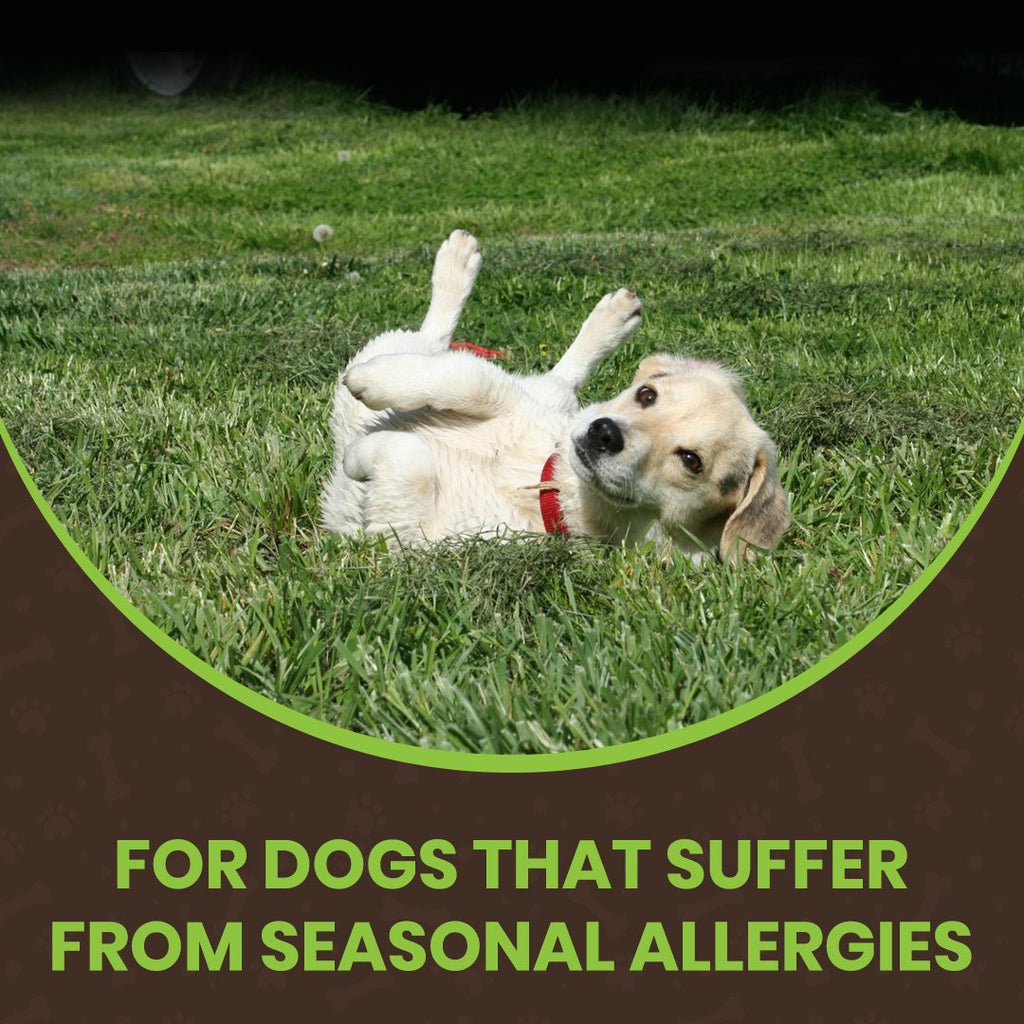ALL-CLEAR DOG ALLERGY SUPPLEMENT