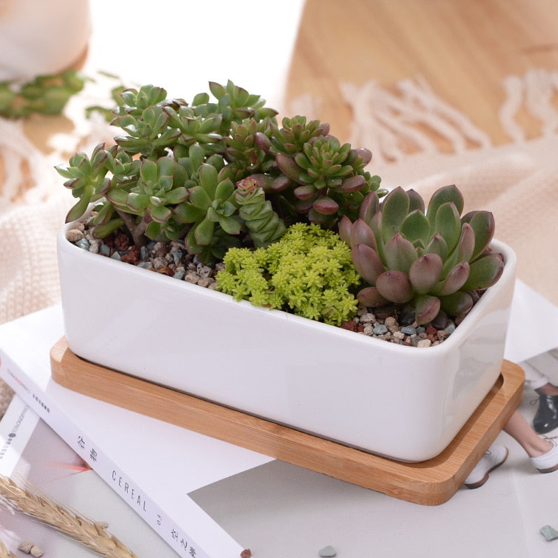 Rectangle White Ceramic Succulent Plant Pot + Tray