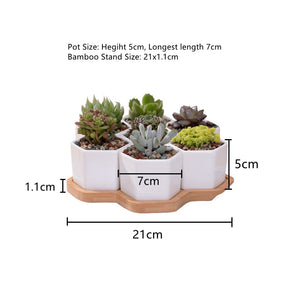 Hexagon White Ceramic Succulent Plant Pot + Tray