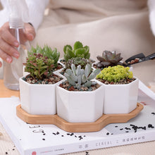 Load image into Gallery viewer, Hexagon White Ceramic Succulent Plant Pot + Tray