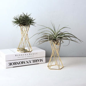 Set of 2 Air Plant Stand
