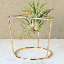 Load image into Gallery viewer, 2 Tabletop Air Plant Stands