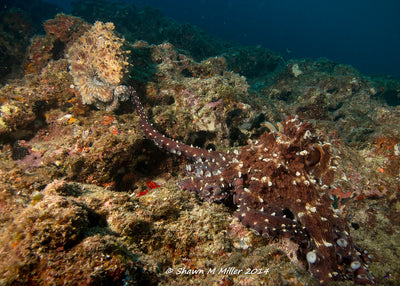 The Octopus: The Most Extreme Ocean Animal