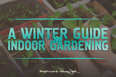A Guide To Indoor Gardening This Winter
