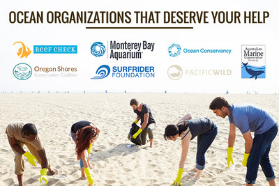 6 Ocean Organizations That Deserve Your Help