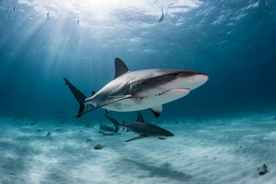 4 Reasons Sharks Are Awesome