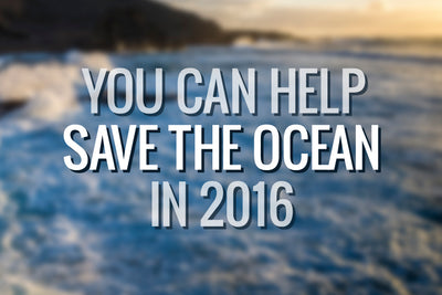 10 Ways You Can Save the Sea in 2016