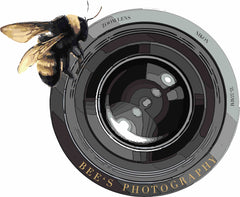 Bees Photography