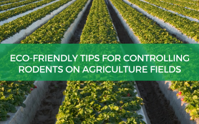 Eco-Friendly Tips For Controlling Rodents On Agriculture Fields