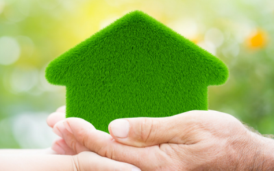 The Importance of Using Eco-Friendly Products in Your Home