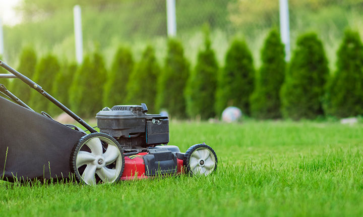 What Causes Lawn Pests, and How to Get Rid of Them