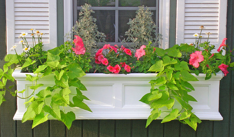 Add Window Boxes to Up Your Curb Appeal