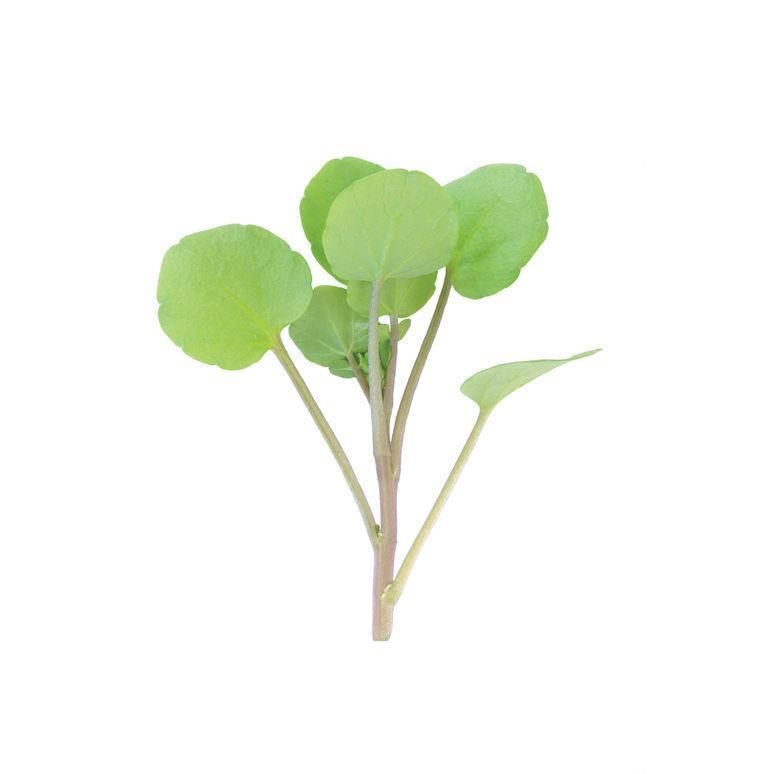 OG Watercress