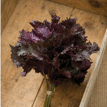 Load image into Gallery viewer, Red Shiso (Perilla)