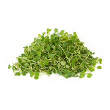 Load image into Gallery viewer, Arugula
