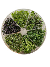 Load image into Gallery viewer, Microgreen Sampler