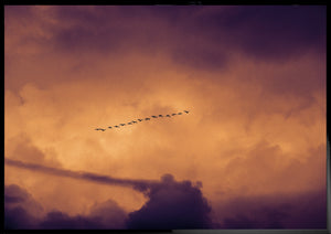 The journey - Birds in the sky