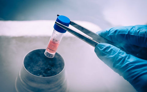 Frequently Asked Questions About Stem Cells