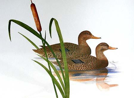 Two Ducks in Reflection