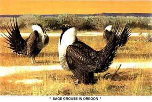 Sage Grouse In Oregon