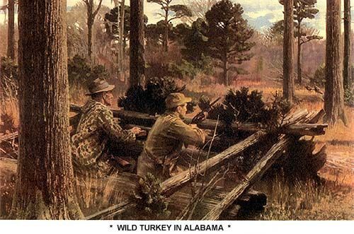 Wild Turkey In Alabama