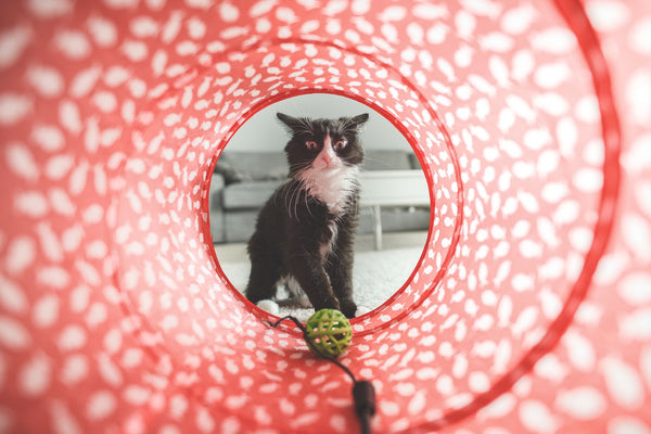 Cat looking at ball inside tunnel toy