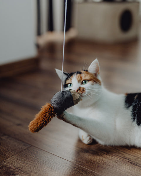 Cat with hanging toy mouse