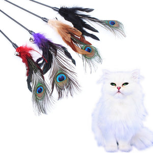 Peacock Feather Teaser Stick Cat Toys Wine Whiskers