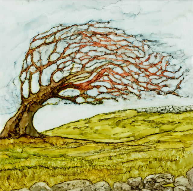West of Ireland, Wild Atlantic Way, hawthorn trees, fairy trees