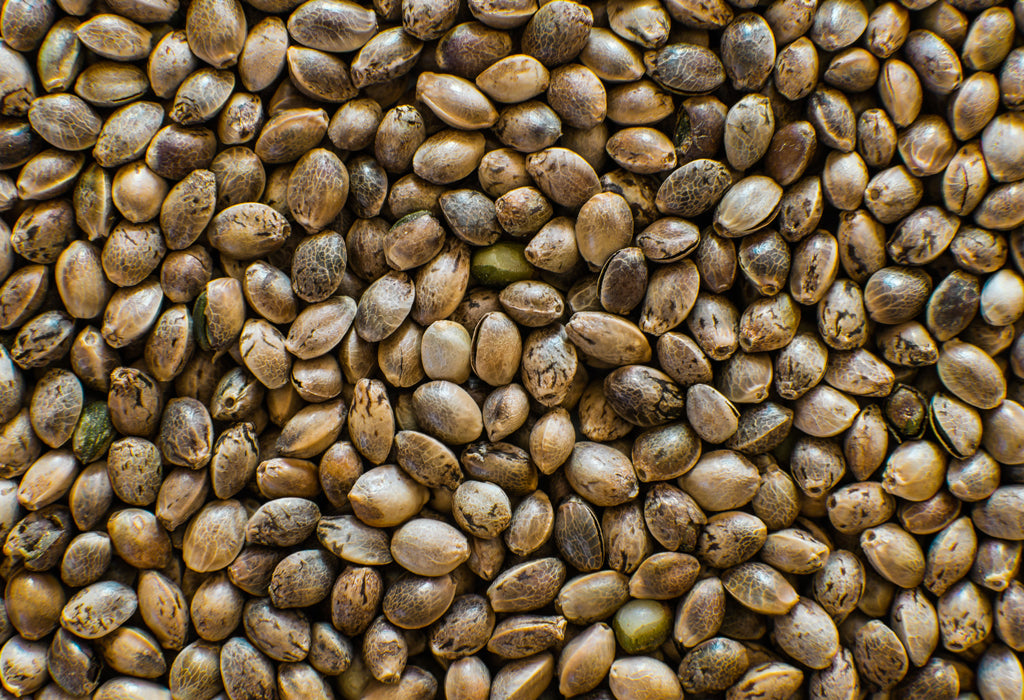 Pea Protein vs Hemp Protein: Which Protein is Better?