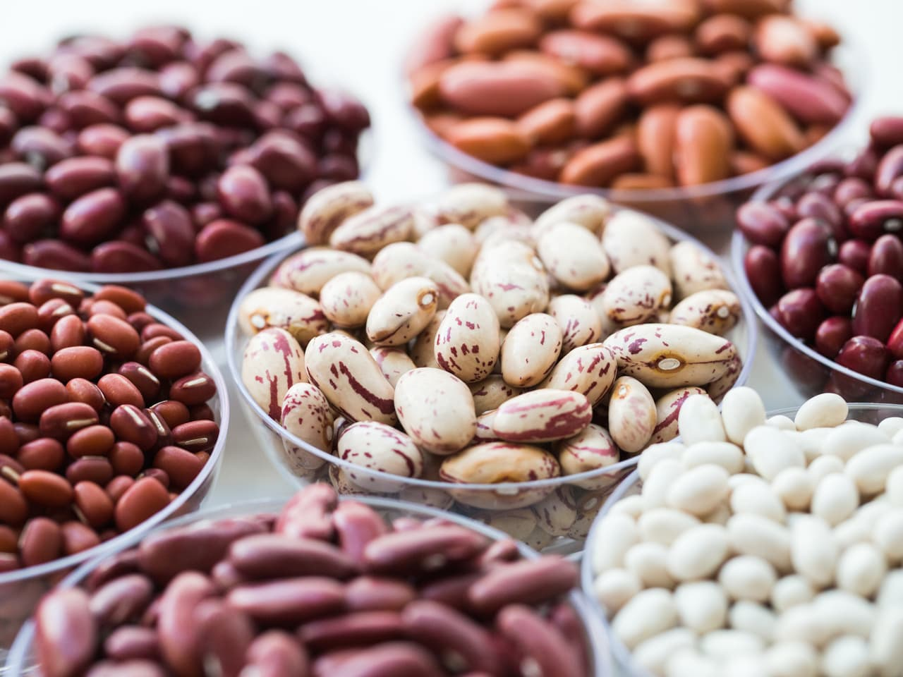 Everything You Ever Wanted to Know About Lectins