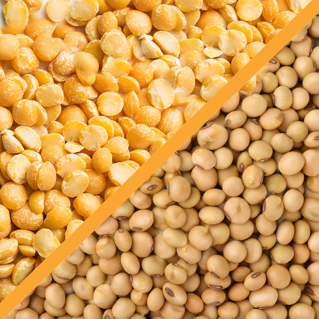 Pea vs Soy Protein: Which Protein is Right for You?
