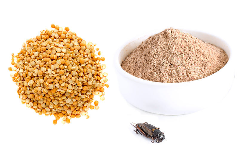 pea protein vs cricket protein